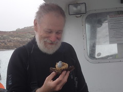 blaise contemplates eating a seal (richie rocket) Tags: scillies seasearch scillyisles cornwall uk
