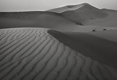 Sahra (sand), EOA (Daniel Salgado Lemos) Tags: seleccionar emirates arabia eoa sand sahra arena area desert desierto duna dune atardecer sunset blancoynegro blackandwhite canon 5dmii 1740