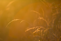 Autumn sunshine (ArtGordon1) Tags: sunset sunrays evening london england walthamstow uk october 2016 davegordon davidgordon daveartgordon davidagordon daveagordon artgordon1 grass