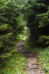 Horsky chodnicek (Miroslava Balazova LAZAROVA) Tags: forest nature landscape beauty slovakia janska dolina