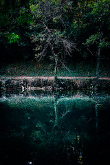 291/366 (romainjacques17) Tags: canon 6d 1635mm ef1635mm tree arbre reflet reflection nature wild 365project 365 project365 picoftheday larochelle france