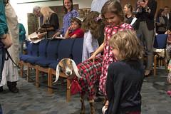 _MG_8403-Goat (tkolami) Tags: rosh hashanah 2016 family service