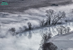 Mist on Adda (P.Ebner) Tags: foschia mist adda river lombardia morning black white blackandwhite blackwhite tree albero trees reflection fiume