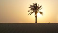 Sundown Dubai desert (|-|) Tags: dubai dubaidesert deserttour tour desert uae sundown sunset nature landscape safari desertsafari palm sun