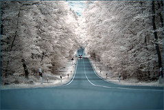 2016 10 16 Wald IR - 07 (Mister-Mastro) Tags: infrared ir wald strase street road rue forrest autumn herbst