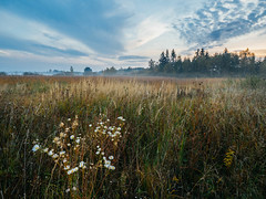 Morning calm II (Radek Fluder) Tags: morning polska chem sunrise flowers forest mist fog clouds calm poland chem