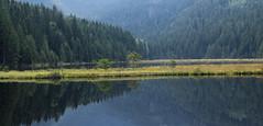 Kleiner Arbersee VII (schauplatz) Tags: bayerischerwald bayerwald deutschland lamerwinkel urlaub kleinerarbersee landscape seascape lake karsee bavarianforest spiegelbild mirrorimage spiegelung forest wald tarn cirquelake