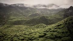 Faded World (TC-Chan) Tags: landscapes natural world hill mountain fade tea farm malaysia cameron highland cloud