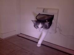20161018-103656-i-1 (Catflap central) Tags: cat catdoor katzenklappe raspberry pi camera cats catflap kattenluik catflapj2nnl pet meow