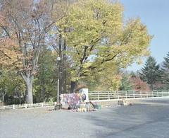 Seoul Grand Park (Egg Cheung) Tags: tree 120 film maple korea medium vendor 6x7 seoulgrandpark stallman fujicolorpro400h fujifilmgf670professional