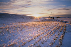 Palouse Frozen Sunlight Stubble (Ryan McGinty) Tags: winter snow film landscape fuji wheat idaho genesee stubble palouse velvia50 contaxg2 g28 nofilters onetake nohdr latahcounty ryanmcginty thisishowtheslideexactlylooks