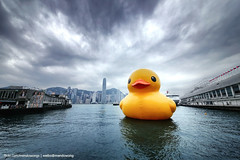 Rubber Duck (mendowong) Tags: sky hk motion water lines canon hongkong golden photo duck wide sigma rubberduck ultra 1224 6d