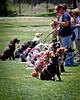 20130519-IMG_4785 (fwisneski) Tags: dogdayafternoon may2013 caninehopefordiabetics