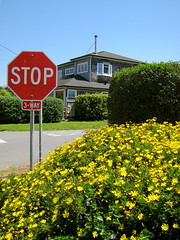 stop flowers (idontkaren) Tags: california street flowers sign yellow stop halfmoonbay