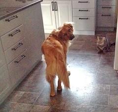 ** Comme chien et chat ** (Impatience_1 (moins active ad mars)) Tags: dog chien pet animal cat chat tisha zipper impatience coth bête animaldecompagnie coth5