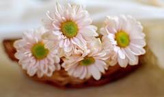 There is always, always, always (Shubha Shrikumar) Tags: morning flowers morninglight nikon nikond5100 shubhashrikumar