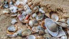 Memories (Michael Schnborn) Tags: samsung s6 beach muschel nature closeup holiday usedom memories