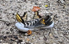 Smelly hangout (Jake (Studio 9265)) Tags: indiana shoe tree milltown usa united states america country rural unusual art hillbilly old smelly sneakers abandoned tossed thrown nikon d5000 weird offbeat unconventional butterflies butterfly muddy lone swallowtail gravel dirt motion moving blur leaves rocks black wet yellow lost hangout string lace knot tied grit