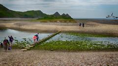 20160618_Parkmill_0049 Stepping Stones over Pennard Pill~Threecliff Bay tm (paul_h2525) Tags: gowerpeninsula southwales pennardpill steppingstones