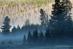 A misty Kawuneeche morning (Marc Haegeman Photography) Tags: rockymountains rockymountainnationalpark colorado usa kawuneechevalley hiking roadtrip morning sunrise outdoor trees nikond750 nikon200500mmf56evr marchaegemanphotography mist fog
