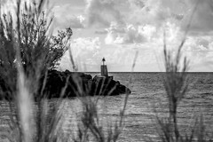 resting spot (-gregg-) Tags: freeport bahamas island bell sky clouds weeds water ocean bw