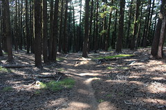 Trail shot, on the way back (rozoneill) Tags: maiden peak trail waldo lake pacific crest oregon hiking willamette pass gold skyline odell butte volcano forest eugene