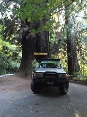 ADV80 Tour Thru Tree Redwoods - Wills RoadTrip 2From OLYMPIA SEPT 2016 (GCRad1) Tags: adv80 tour thru tree redwoods wills roadtrip 2from olympia sept 2016