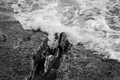 Channel (K.G.Hawes) Tags: coast erie greatlakes lake lakeerie rock rocks rocky splash splashing water wave waves black white blackandwhite bw monochrome monochromatic