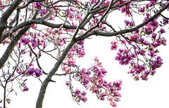 DSCF4478 (kiwibloke888) Tags: garden fujixt1 xf35f14 spring