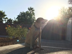 P2_Tadlock_Arrion_light_01 (dashingaj03) Tags: sundog
