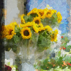 Bunches of Sunshine (Lemon~art) Tags: bunch flowers sunshine sunflowers wrapped flowerstall texture manipulation bright