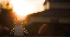 sharing the sunrise - 264/366 (auntneecey) Tags: odc transition sunrise sharingthesunrise htbt teddybear teddy toy happyteddybeartuesday rimlighting sunflare bokeh 366the2016edition 3662016 day264366 20sep16