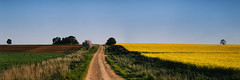 Green_And_Gold_02 (Beetwo77) Tags: fuji xt1 90mm xf pano panorama hand held autopano nsw central west cowra canola field green gold aussie oi tourism travel