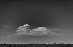 Bunny (nokkie1) Tags: groningen holland sky clouds bunny grass sun white blue black monochrome outdoor