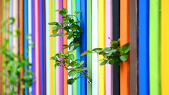 """Fence of Colour""  | Fitzroy | Melbourne | Victoria | Australia (Ben Molloy Photography) Tags: fenceofcolour | fitzroy melbourne victoria australia colours rainbow bright"