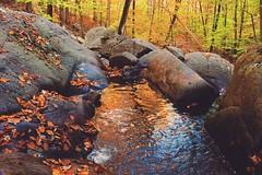 Hacklebarney State Park - Chester, NJ (Christian Montone) Tags: montone christianmontone nature fall autumn park landscape chester newjersey instagram