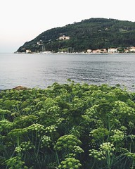 #vscocam #iphoneonly #sea #nature #green #seascape (presso Fiumaretta) (Gianluca Ferrazza Photography) Tags: nature seascape iphoneonly green sea vscocam