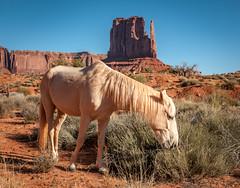 Monument Valley (HubbleColor {Zolt}) Tags: horse butte monumentvalleynavajotribalpark
