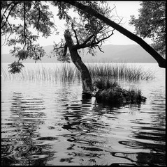 shadow in the water (my analog journey) Tags: 500cm ilfordfp4plus125 planar2880cft laacherseeeifel lakelaach blackwhite movformatcom mov ©bymikemov 062016 mediumformat filmlover filmisstillalife nature filmdev:recipe=10997 ilfordfp4125 kodakhc110 film:brand=ilford film:name=ilfordfp4125 film:iso=125 developer:brand=kodak developer:name=kodakhc110