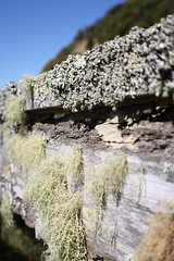 Hanging Moss on the pens (robertpeckyno) Tags: wellington windturbine windmill metalart outsiderart peckyno newzealand landscape