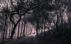 Walk in Haze (Kanak Mahmud) Tags: outdoor comilla bard travel people monochrome landscape nikond750 road gray morning bangladesh
