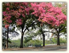 Primavera na Quinta da Boa Vista (o.dirce) Tags: folhas quintadaboavista riodejaneiro odirce cidademaravilhosa