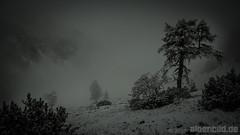 Ein Prosit der Gemtlichkeit (alpenbild.de) Tags: d800 d800e nikond800e nikon alpen alpenbildde alpin alpine alps austria autumn autumnal baum blackandwhite cloud clouds daemmerung dmmerung eng fall fog foggy forest fullframe fx herbst herbstlich karwendel landscape landschaft monochrom monochrome morgen morgens morning natur nature nebel neblig risstal sw schwarzweiss sepia tirol tree twilight tyrol vollformat wald winter wolke wolken wood woods sterreich