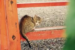 Today's Cat@2016-10-12 (masatsu) Tags: cat thebiggestgroupwithonlycats catspotting pentax mx1