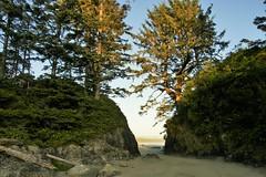 Beach, Pacific Rim (dylan583) Tags: sigmadc2841770oshsm sigmalens sonya700 sonydslra700 tofino pacificrimnationalpark beach britishcolumbia water vancouverisland