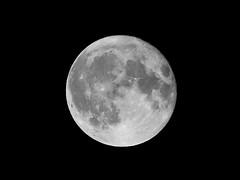 Hunter's Moon (Matthew_Hartley) Tags: huntersmoon moon fullmoon supermoon perigeefullmoon helmshore haslingden rossendale lancashire northwest england uk britain panasonic lumix gm1 microfourthirds m43 mft 45200 45200mm vario