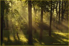 Infiltrazioni di luce... (leon.calmo) Tags: leoncalmo canon eos50d bosco raggidiluce ombre luci alberi allapero