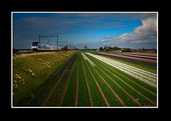 Landschap (Theo Kelderman) Tags: canon trein landschap bollenvelden bennebroek theokeldermanphotography fietstochtdoordebollenstreek lenteapril2013