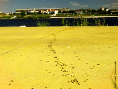 Natures Roadway (TiagoPlopess) Tags: cidade summer portugal nature water animal yellow spring europe alone photographer natural ant explore amarelo urbananimals abrantes aquapolis s4500 santrem urbanvintage finepixs4500