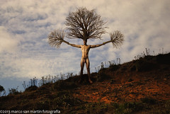 Oto - o (Marco San Martin) Tags: autumn sky man tree art fall leaves composition naked nude landscape hojas arbol hill valle cielo valley nubes otoo colina nudeart hombre ngen nue nag composicion   pasti  alasti nocht    falder dezbrcat marcosanmartin